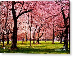 Pink Forest Acrylic Print by Patti Whitten