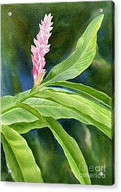 Pink Ginger Flower Acrylic Print by Sharon Freeman