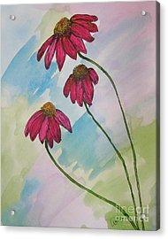 Pink Acrylic Print by Marcia Weller-Wenbert