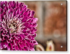 Pink Mum Acrylic Print by Lana Trussell