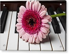 Pink Mum On Piano Keys Acrylic Print by Garry Gay