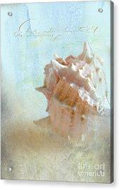 Pink Murex Seashell Acrylic Print by Betty LaRue
