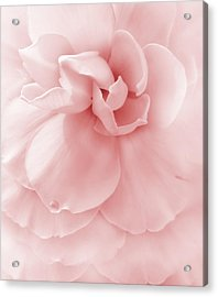 Pink Ruffled Begonia Flower Acrylic Print by Jennie Marie Schell