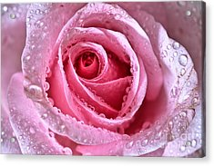 Pink Shimmering Rose Acrylic Print by Tracy  Hall