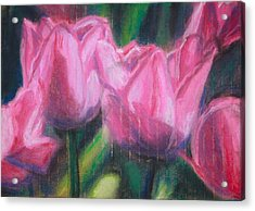 Pink Tulips Acrylic Print by Sarah Vandenbusch