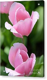 Pink Twins Acrylic Print by Kathleen Struckle