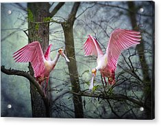 Pink Wings In The Swamp Acrylic Print by Bonnie Barry