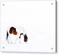Pinto Pony Acrylic Print by Theresa Tahara