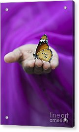 Plain Tiger Butterfly Acrylic Print by Tim Gainey