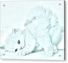 Playful Kitty Acrylic Print by J D Owen