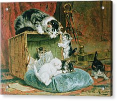 Playtime Acrylic Print by Henriette Ronner-Knip