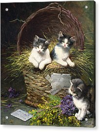 Playtime Acrylic Print by Leon Charles Huber