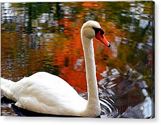 Pleasant Welcome Acrylic Print by Lourry Legarde