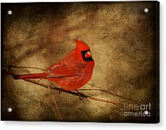 Please Feed The Birds Acrylic Print by Lois Bryan