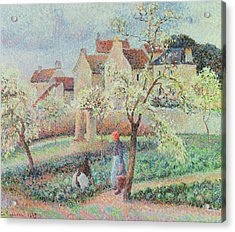 Plum Trees In Flower Acrylic Print by Camille Pissarro