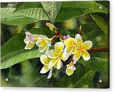 Plumeria Blossoms Acrylic Print by Sharon Freeman