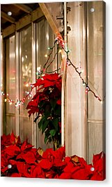 Poinsettia Acrylic Print by Tracy Winter