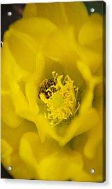 Pollen Flying Acrylic Print by Bonita Hensley