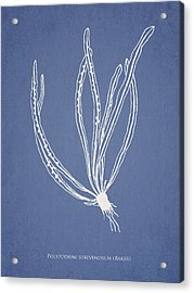 Polypodium Subevenosum Acrylic Print by Aged Pixel