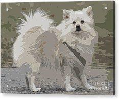Pomeranian Dog Acrylic Print by Jivko Nakev