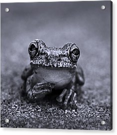 Pondering Frog Bw Acrylic Print by Laura Fasulo