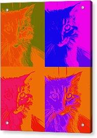 Pop Art Cat  Acrylic Print by Ann Powell