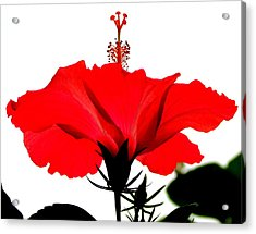 Pop Of Red Acrylic Print by Ramona Johnston