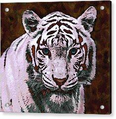 Popart White Tiger- Larger Acrylic Print by Jane Schnetlage