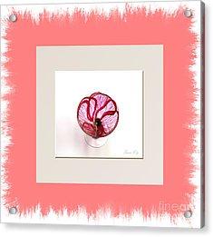 Poppy. Holiday Collection Acrylic Print by Oksana Semenchenko