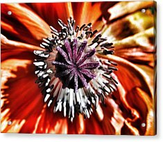 Poppy - Macro Fine Art Photography Acrylic Print by Marianna Mills