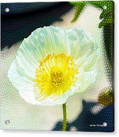 Poppy Series - Beside The Sidewalk Acrylic Print by Moon Stumpp