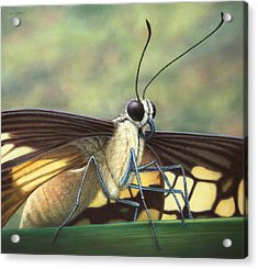 Portrait Of A Butterfly Acrylic Print by James W Johnson