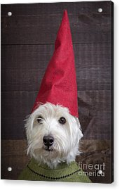 Portrait Of A Garden Gnome Acrylic Print by Edward Fielding