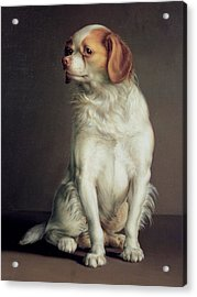 Portrait Of A King Charles Spaniel Acrylic Print by Louis Leopold Boilly