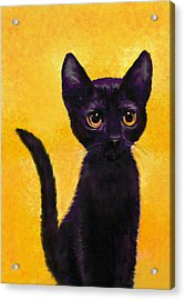 portrait of a small black cat named  LuLu Acrylic Print by Jane Schnetlage