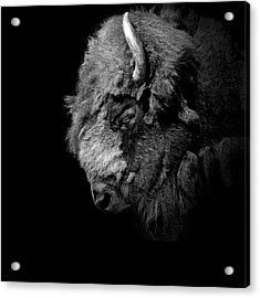 Portrait Of Buffalo In Black And White Acrylic Print by Lukas Holas