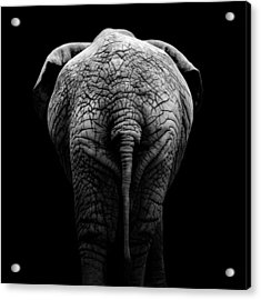 Portrait Of Elephant In Black And White II Acrylic Print by Lukas Holas
