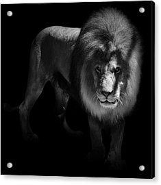Portrait Of Lion In Black And White Acrylic Print by Lukas Holas