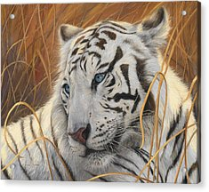 Portrait White Tiger 1 Acrylic Print by Lucie Bilodeau