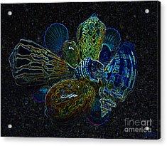 Positive Energy Seashells - Lucky Black Series Acrylic Print by Hanza Turgul