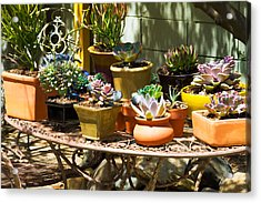 Potted Succulents  Acrylic Print by Bernard  Barcos