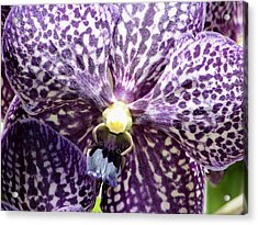 Power Of Purple Acrylic Print by Karen Wiles
