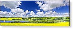 Prairie Panorama In Saskatchewan Acrylic Print by Elena Elisseeva