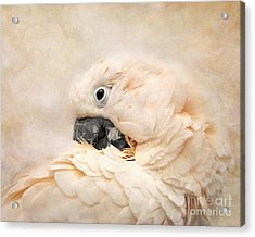 Preening Acrylic Print by Jai Johnson