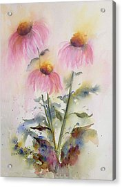 Pretty Coneflowers Acrylic Print by Bette Orr