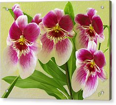 Pretty Faces - Orchid Acrylic Print by Ben and Raisa Gertsberg