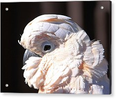 Pretty In Pink Salmon-crested Cockatoo Portrait Acrylic Print by  Andrea Lazar