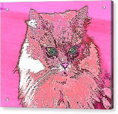 Pretty Kitty In Pink Acrylic Print by Kathy Budd