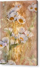 Pretty Little Weeds IIi Acrylic Print by Debbie Portwood