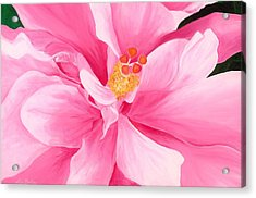 Pretty Pink Hibiscus Painting Acrylic Print by Lisa Bentley